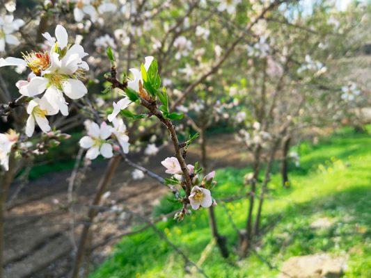 primavera en sanlúcar de guadiana
